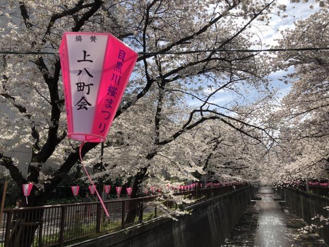 [遊記] 2019 東京櫻花賞 目黑川 千鳥淵