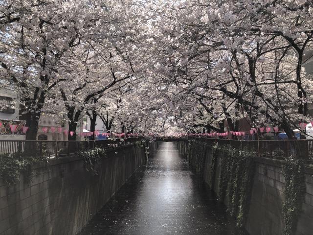 sakura japan tokyo 2019 nakameguro-4