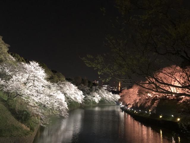 sakura japan tokyo 2019 with tokyo tower