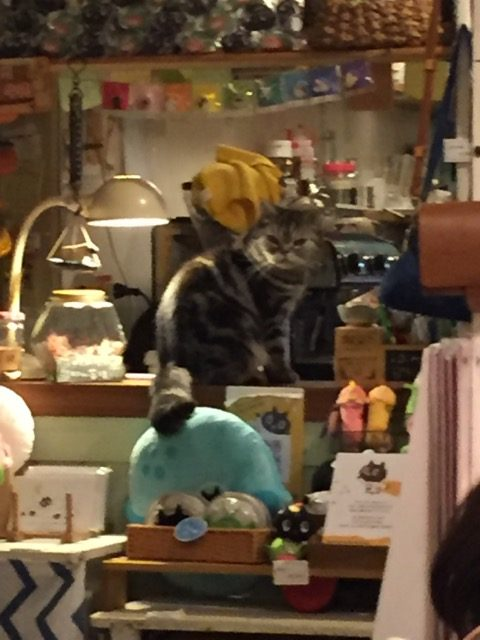 cats on the counter