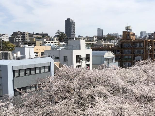 starbucks tokyo nakameguro bird eye view